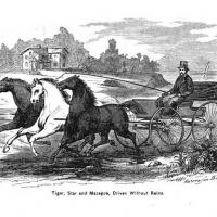 Езда в упряжи без вожжей - книга А.Х. Роквелла 1866 года - фото 2-200x200, главная Книги о лошадях Разное Тренинг , конный журнал EquiLIfe