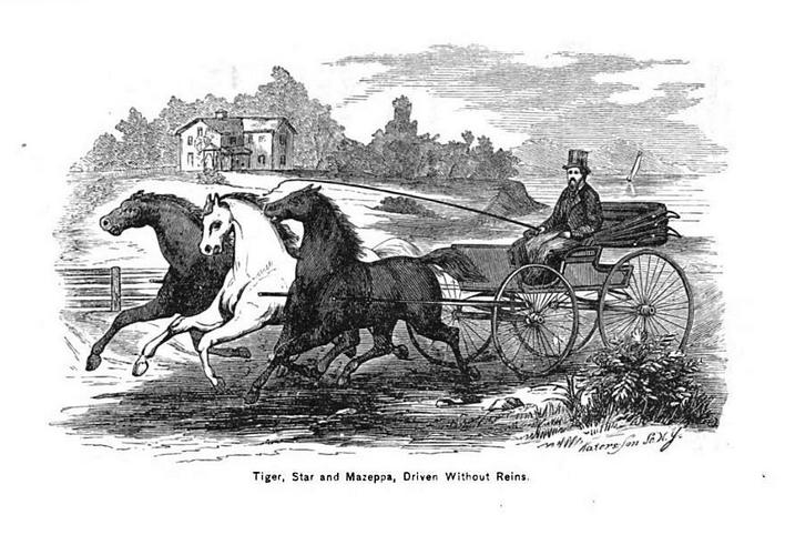Езда в упряжи без вожжей - книга А.Х. Роквелла 1866 года - фото 2, главная Книги о лошадях Разное Тренинг , конный журнал EquiLIfe