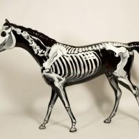 Расписные лошади из Лексингтона - Horsemania! - фото HorsePlay-SCAPA-H-S-200x200, главная Разное Фото , конный журнал EquiLIfe