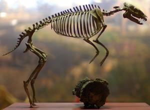 В поисках модели образцового копыта. - фото 640px-HyracotheriumVasacciensisLikeHorse-300x220, главная Копыта Разное , конный журнал EquiLIfe