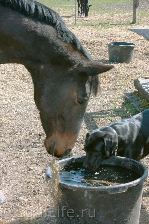 Обезвоженность организма лошади - фото 085_wm, главная Здоровье лошади Конюшня Рацион Содержание лошади , конный журнал EquiLIfe