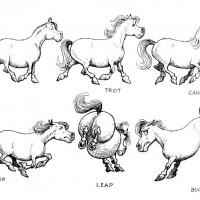 Забавные пони Нормана Телвелла - фото 67a7487adc28877df631415e43287809-200x200, главная Разное Фото , конный журнал EquiLIfe