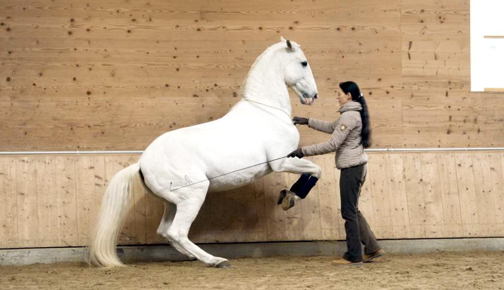 Аня Беран отвечает на вопросы читателей EquiLife.ru - фото CFN8171-копия-21, Аня Беран главная Интервью Тренинг , конный журнал EquiLIfe
