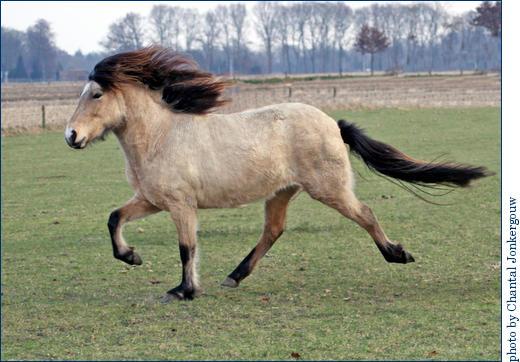 Аллюры лошадей - фото ChantalJonkergouw_ToltLibertyChantal, главная Интересное о лошади Разное , конный журнал EquiLIfe