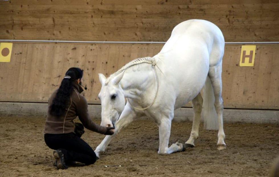 Аня Беран отвечает на вопросы читателей EquiLife.ru - фото DSC5274, Аня Беран главная Интервью Тренинг , конный журнал EquiLIfe