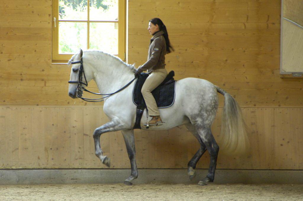 Аня Беран отвечает на вопросы читателей EquiLife.ru - фото DSC7216_Test_Druckerei, Аня Беран главная Интервью Тренинг , конный журнал EquiLIfe