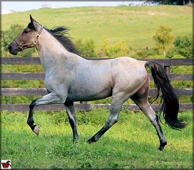 Аллюры лошадей - фото GeneratorsDRBlueGaiting, главная Интересное о лошади Разное , конный журнал EquiLIfe