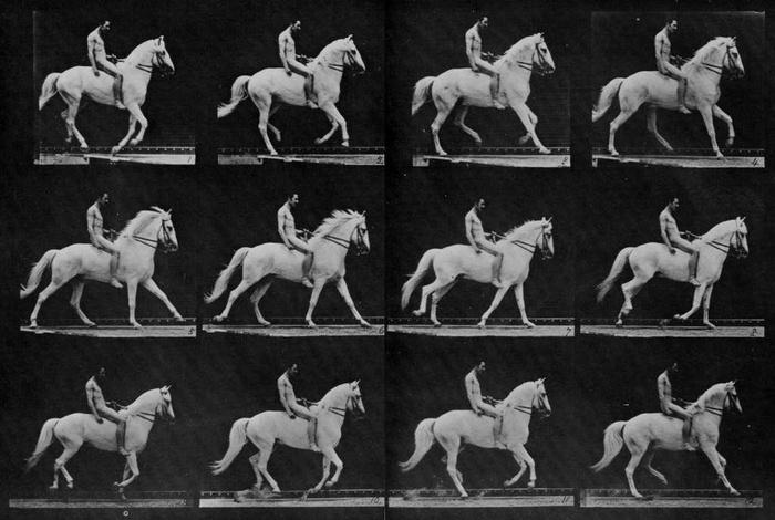 Аллюры лошадей - фото thumb_700, главная Интересное о лошади Разное , конный журнал EquiLIfe