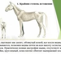 Кондиция лошади - фото 1-копия_wm-200x200, главная Здоровье лошади Разное , конный журнал EquiLIfe