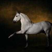 Ян Артюс-Бертран (Yann Arthus-Bertrand) - фото 1-200x200, главная Разное Фото , конный журнал EquiLIfe