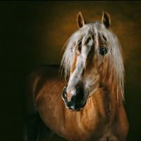 Ян Артюс-Бертран (Yann Arthus-Bertrand) - фото 10-200x200, главная Разное Фото , конный журнал EquiLIfe