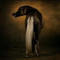 Ян Артюс-Бертран (Yann Arthus-Bertrand) - фото 12-200x200, главная Разное Фото , конный журнал EquiLIfe