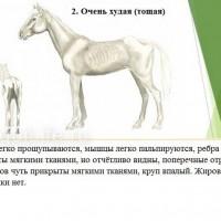 Кондиция лошади - фото 2-копия_wm-200x200, главная Здоровье лошади Разное , конный журнал EquiLIfe