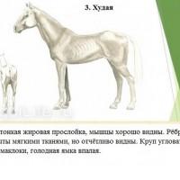 Кондиция лошади - фото 3-копия_wm-200x200, главная Здоровье лошади Разное , конный журнал EquiLIfe