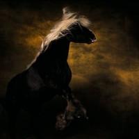 Ян Артюс-Бертран (Yann Arthus-Bertrand) - фото 3-200x200, главная Разное Фото , конный журнал EquiLIfe