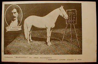 Маскот, конь-интеллектуал за 50 000 долларов - фото 3698f8c01ad006873e38fde8582a281e, главная Конные истории Разное , конный журнал EquiLIfe