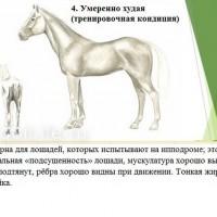 Кондиция лошади - фото 4-копия_wm-200x200, главная Здоровье лошади Разное , конный журнал EquiLIfe