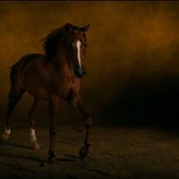 Ян Артюс-Бертран (Yann Arthus-Bertrand) - фото 4-200x200, главная Разное Фото , конный журнал EquiLIfe