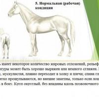 Кондиция лошади - фото 5-копия_wm-200x200, главная Здоровье лошади Разное , конный журнал EquiLIfe