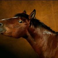 Ян Артюс-Бертран (Yann Arthus-Bertrand) - фото 5-200x200, главная Разное Фото , конный журнал EquiLIfe