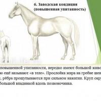 Кондиция лошади - фото 6-копия_wm-200x200, главная Здоровье лошади Разное , конный журнал EquiLIfe