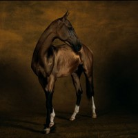 Ян Артюс-Бертран (Yann Arthus-Bertrand) - фото 6-200x200, главная Разное Фото , конный журнал EquiLIfe