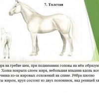 Кондиция лошади - фото 7-копия_wm-200x200, главная Здоровье лошади Разное , конный журнал EquiLIfe