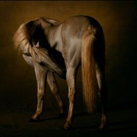 Ян Артюс-Бертран (Yann Arthus-Bertrand) - фото 7-200x200, главная Разное Фото , конный журнал EquiLIfe