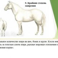 Кондиция лошади - фото 9-копия_wm-200x200, главная Здоровье лошади Разное , конный журнал EquiLIfe