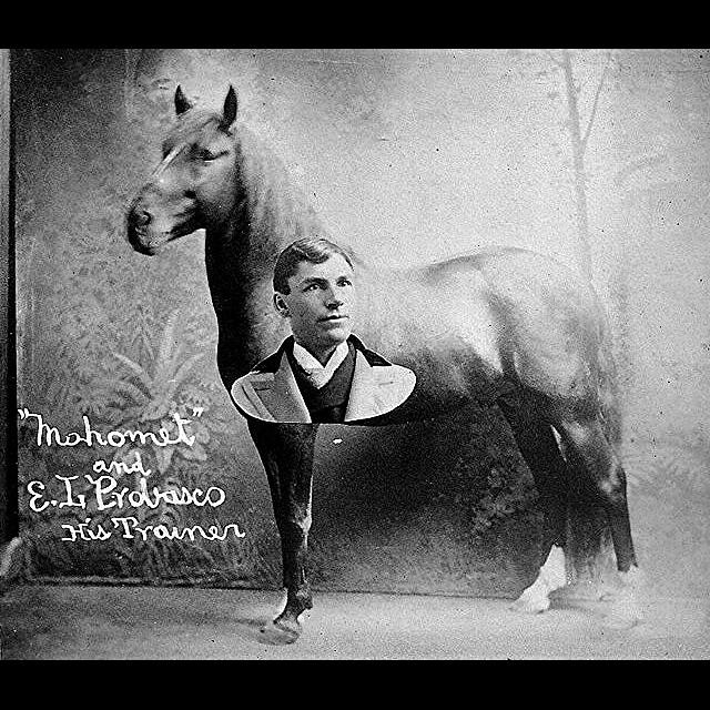 Магомет: учёный конь, который выступал свидетелем на суде! - фото EllsworthLProbascoHorseMahomet1, главная Конные истории Разное , конный журнал EquiLIfe