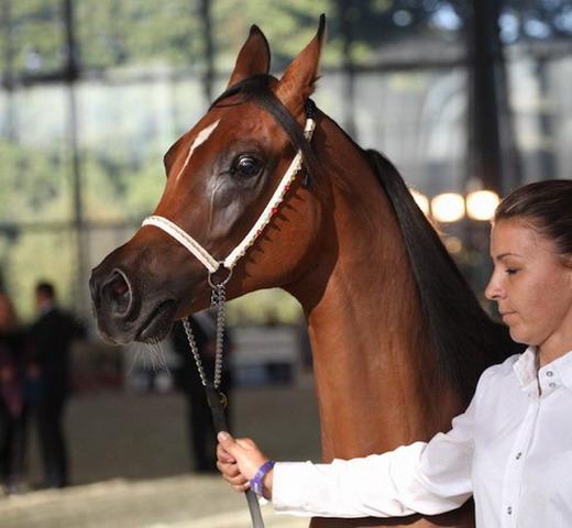 «Конная Россия» - в новом доме - фото IMG_7983, главная Новости , конный журнал EquiLIfe