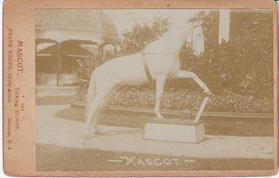 Маскот, конь-интеллектуал за 50 000 долларов - фото b6a22c9411bfa7ec7e3abf22827ad866, главная Конные истории Разное , конный журнал EquiLIfe