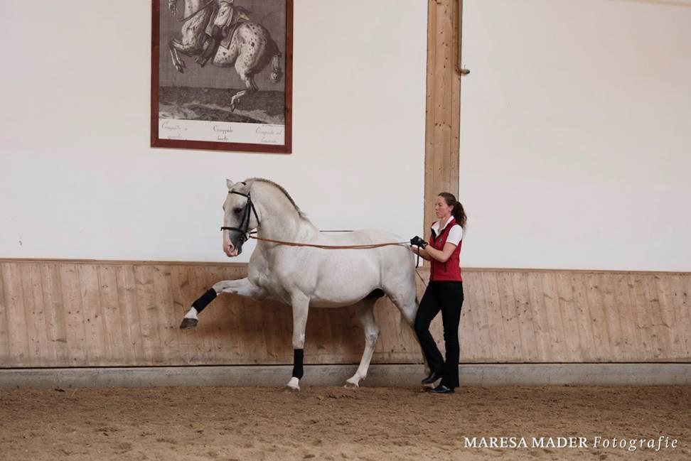 Интервью с ученицей Ани Беран - Верой Мундерло  (Vera Munderloh) - фото image006, Аня Беран главная Интервью , конный журнал EquiLIfe