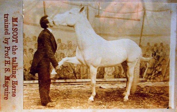 Маскот, конь-интеллектуал за 50 000 долларов - фото mascot-talking-horse, главная Конные истории Разное , конный журнал EquiLIfe