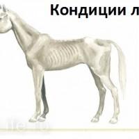 Кондиция лошади - фото mini-200x200, главная Здоровье лошади Разное , конный журнал EquiLIfe
