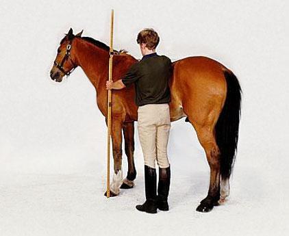 Осенние курсы для ветеринаров, зоотехников и ковалей - фото 887564, главная Новости , конный журнал EquiLIfe