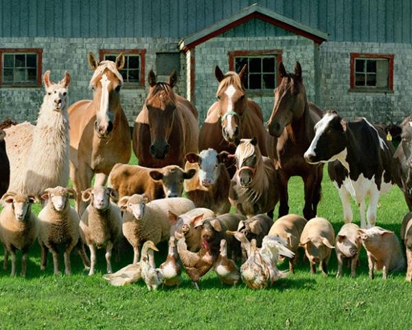"""Московская выставка """"Золотая осень""""-2015 пройдёт в октябре! - фото Farm_Animals, Новости , конный журнал EquiLIfe"""