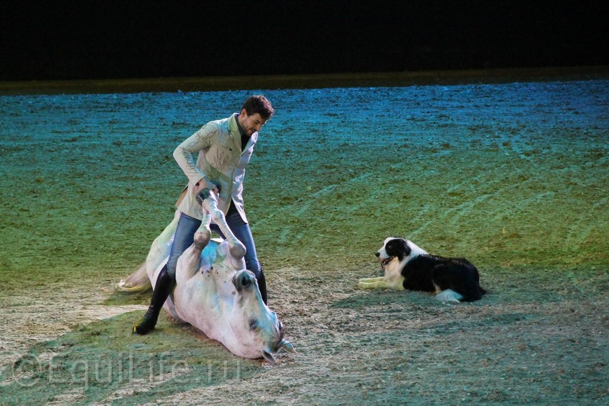 """Санти Серра Кэмпс: """"Еще до того, как я научился ходить, мой отец учил меня сидеть в седле"""" - фото IMG_7915_wm1, главная Интервью Разное , конный журнал EquiLIfe"""