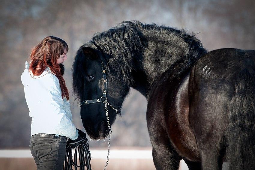 Валерия Короткевич: Моя анималистика - фото z_a4b74475, главная Интервью Фото , конный журнал EquiLIfe