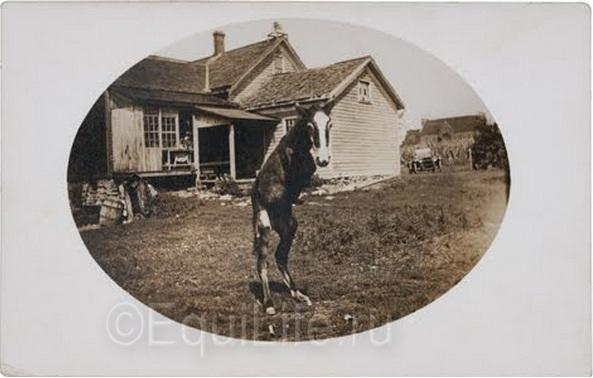 История одной фотографии: двуногий жеребёнок! - фото _wm, главная Конные истории Разное , конный журнал EquiLIfe