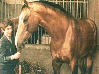 ТОП-10 художественных кинофильмов о лошадях - фото -красивый-конь, Фильмы про лошадей , конный журнал EquiLIfe