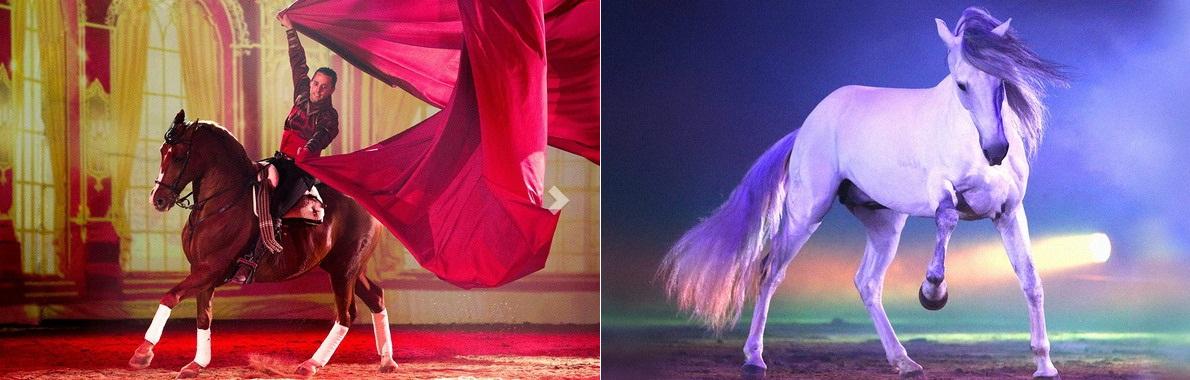 30-31 января 2016г. шоу Apassionata в Хельсинки. - фото 1, Новости , конный журнал EquiLIfe