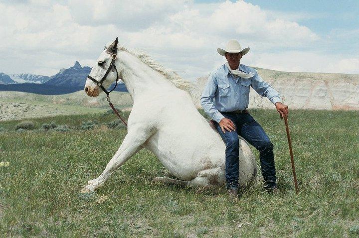 Легендарные клейдесдали «Будвайзера»! - фото 40739_118475391543119_1759389_n, главная Разное События Фото , конный журнал EquiLIfe