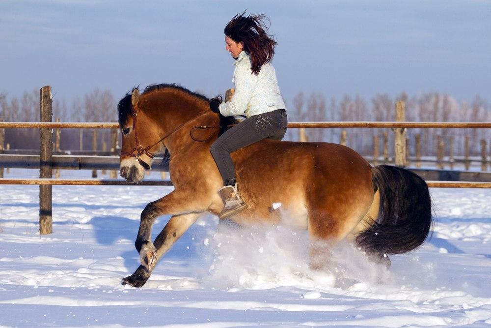 Валерия Короткевич: Моя анималистика - фото 9muB2Gr2CcA, главная Интервью Фото , конный журнал EquiLIfe
