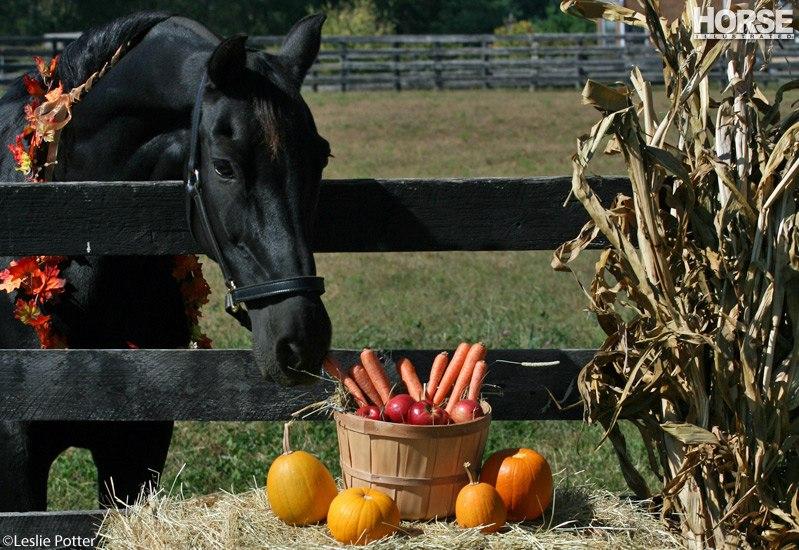 Можно ли давать лошади тыкву? - фото QKN5A_gW-Zo, главная Разное Рацион Содержание лошади , конный журнал EquiLIfe