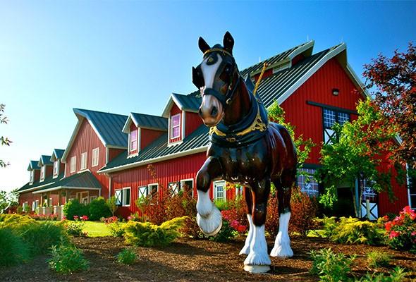 Легендарные клейдесдали «Будвайзера»! - фото WarmSpringsRanch_Gallery__0016_17, главная Разное События Фото , конный журнал EquiLIfe