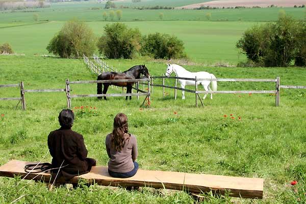 ТОП-10 художественных кинофильмов о лошадях - фото dance-avec-lui, Фильмы про лошадей , конный журнал EquiLIfe