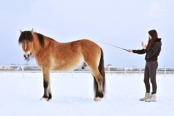 Валерия Короткевич: Моя анималистика - фото dpK780BzemQ, главная Интервью Фото , конный журнал EquiLIfe