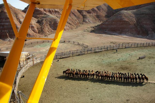 Легендарные клейдесдали «Будвайзера»! - фото frontpage4, главная Разное События Фото , конный журнал EquiLIfe