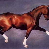 Патрисия Пауэрс (Patricia Powers) - фото g_evening-200x200, главная Конные истории Разное , конный журнал EquiLIfe